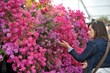 Get Tickets for RHS Flower Show Cardiff at Bute Park, Cardiff
